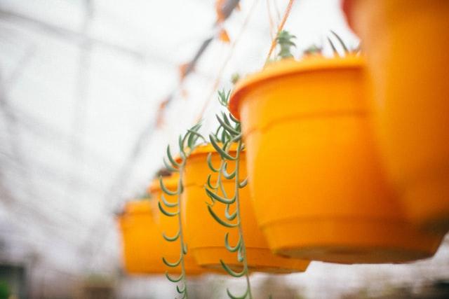 Best Nursery Pots
