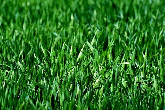 Best Time To Plant Grass Seed
