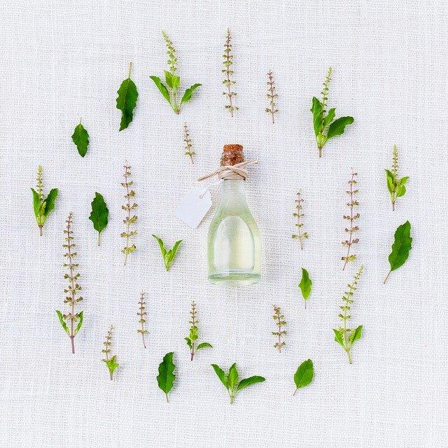 10 Perennial Herbs