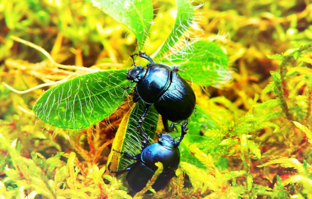flea beetle control