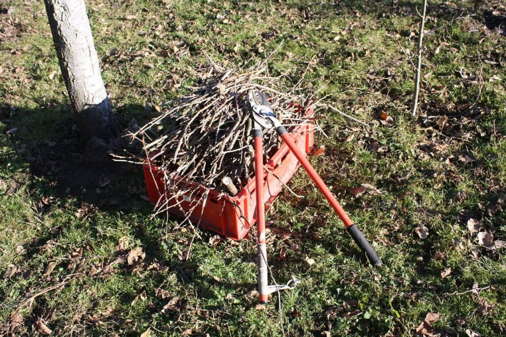 How to-prune tree branches