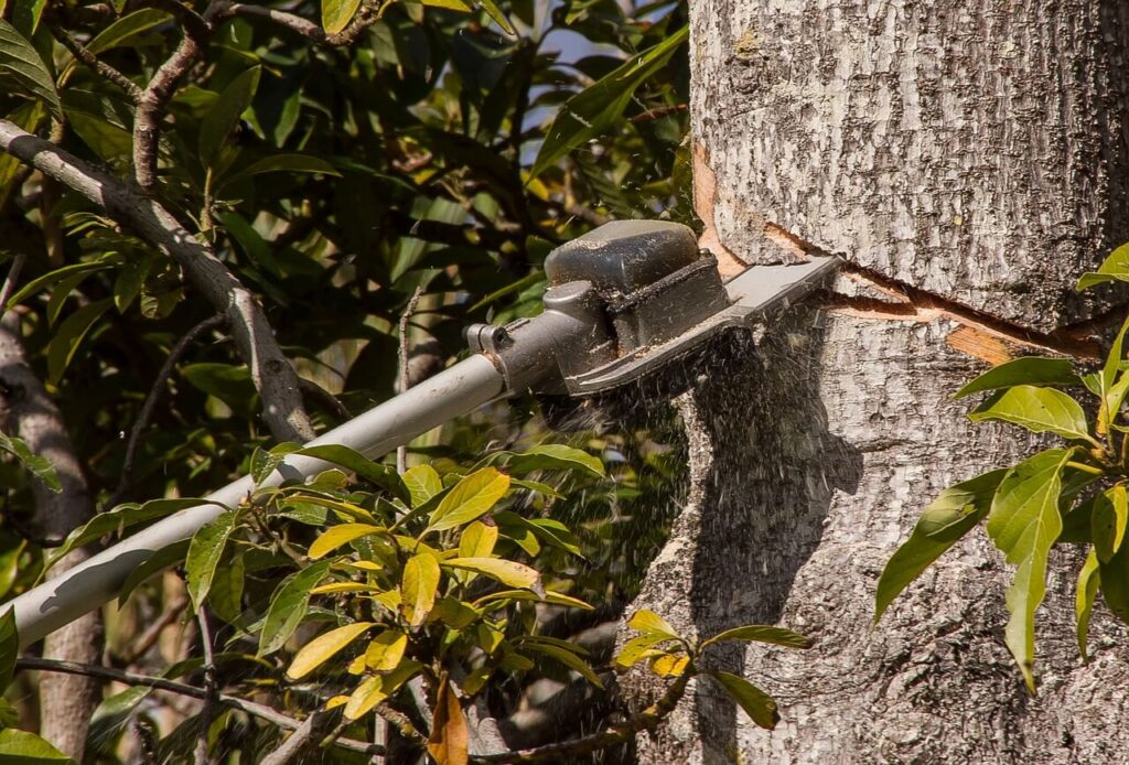 chainsaw pruning tree