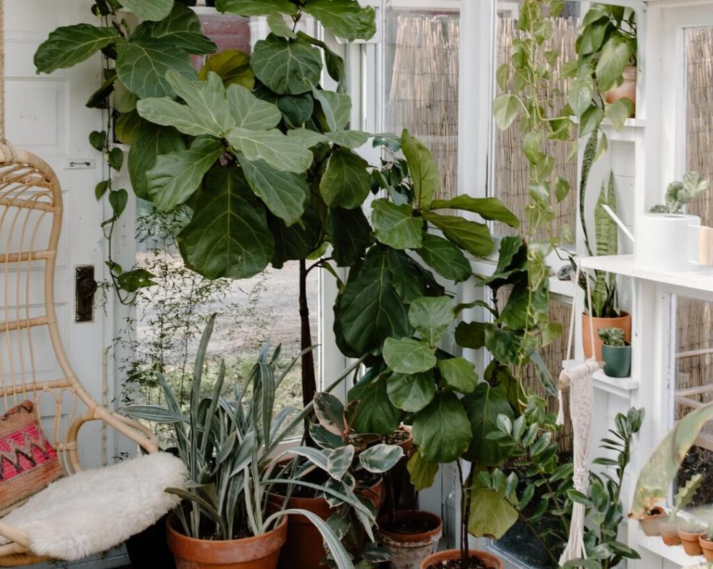 Big Leaf Plants