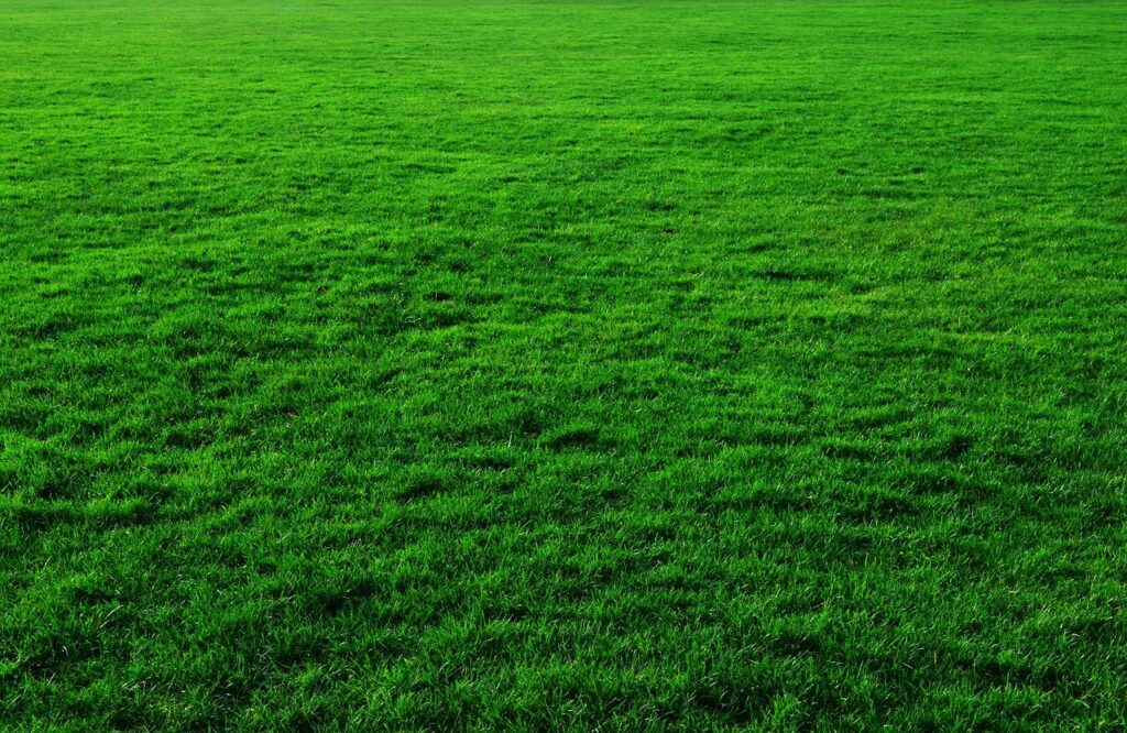 What is the best time to water your lawn