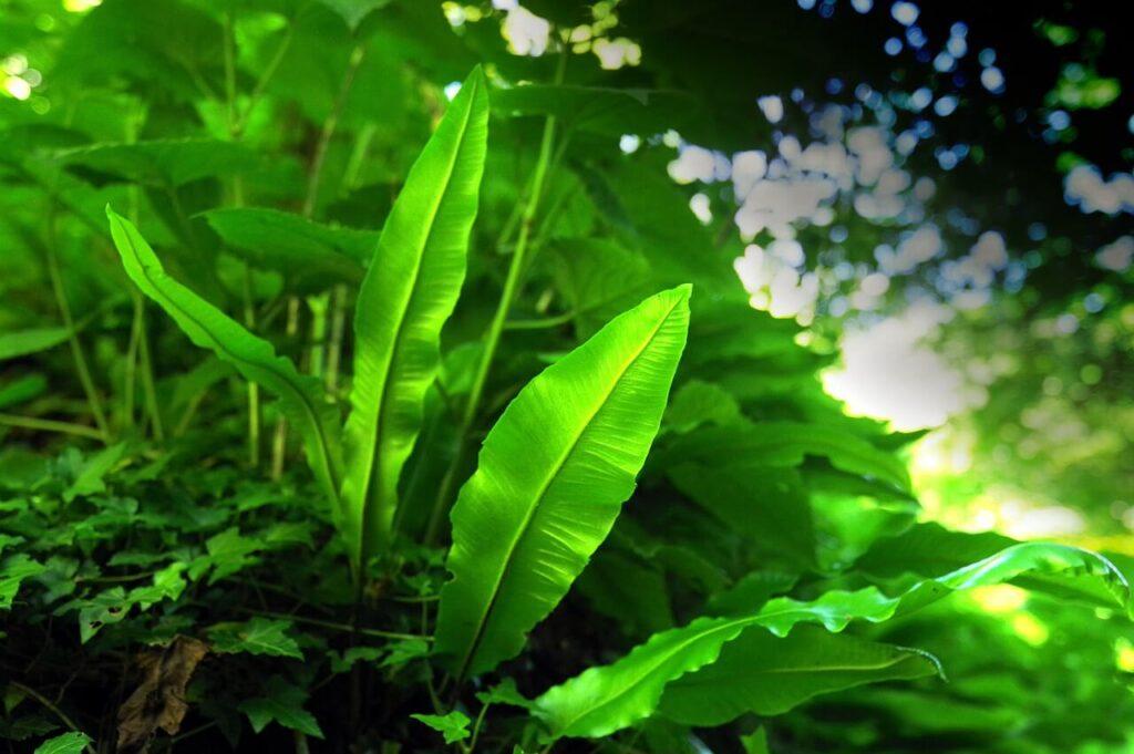 Crispy Wave Fern Plants Care