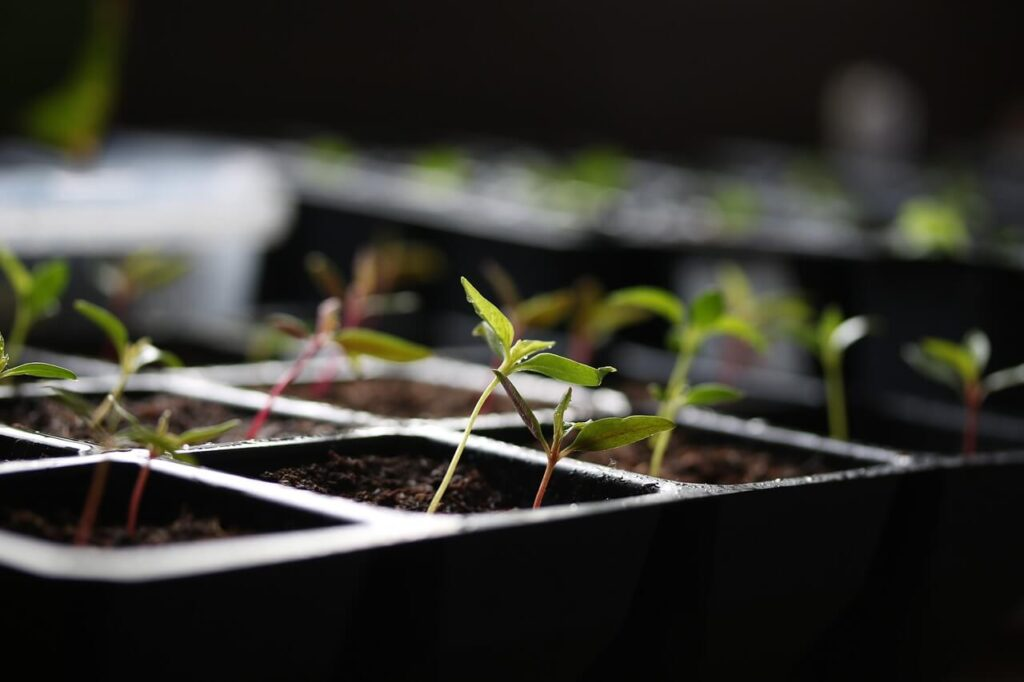 Seedling Heat Mats Plants
