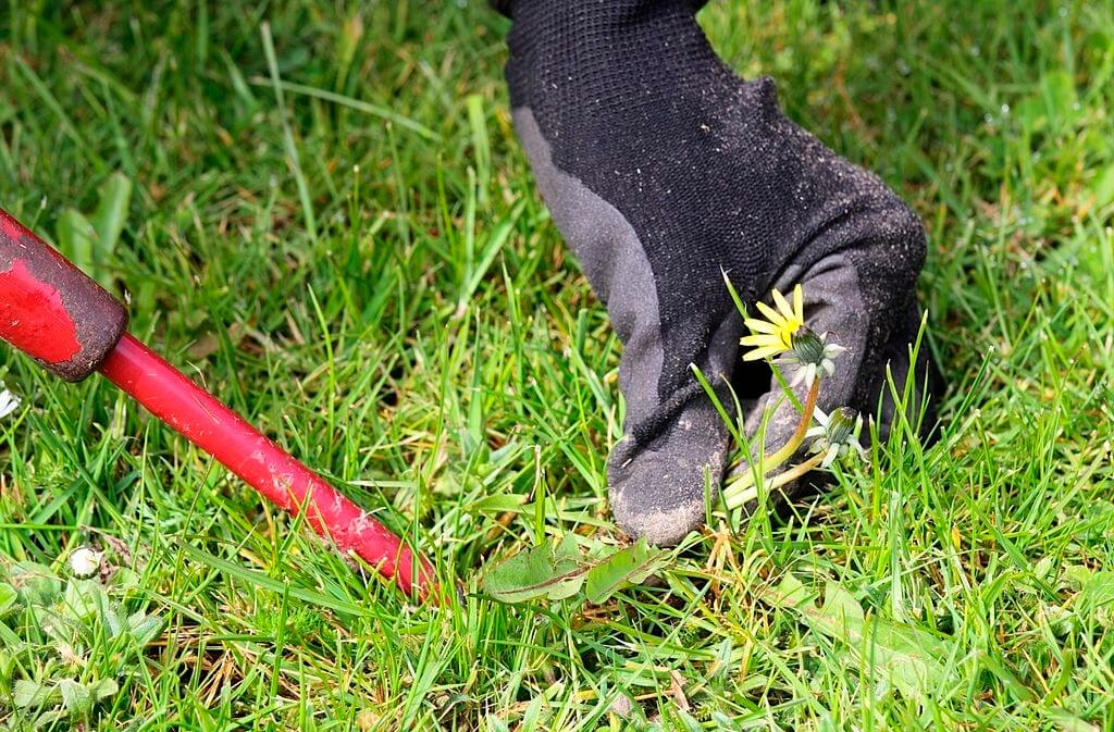 Herbicides Weed Removal