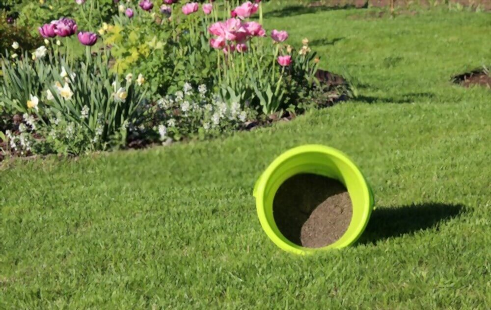 Improves the Soil Quality