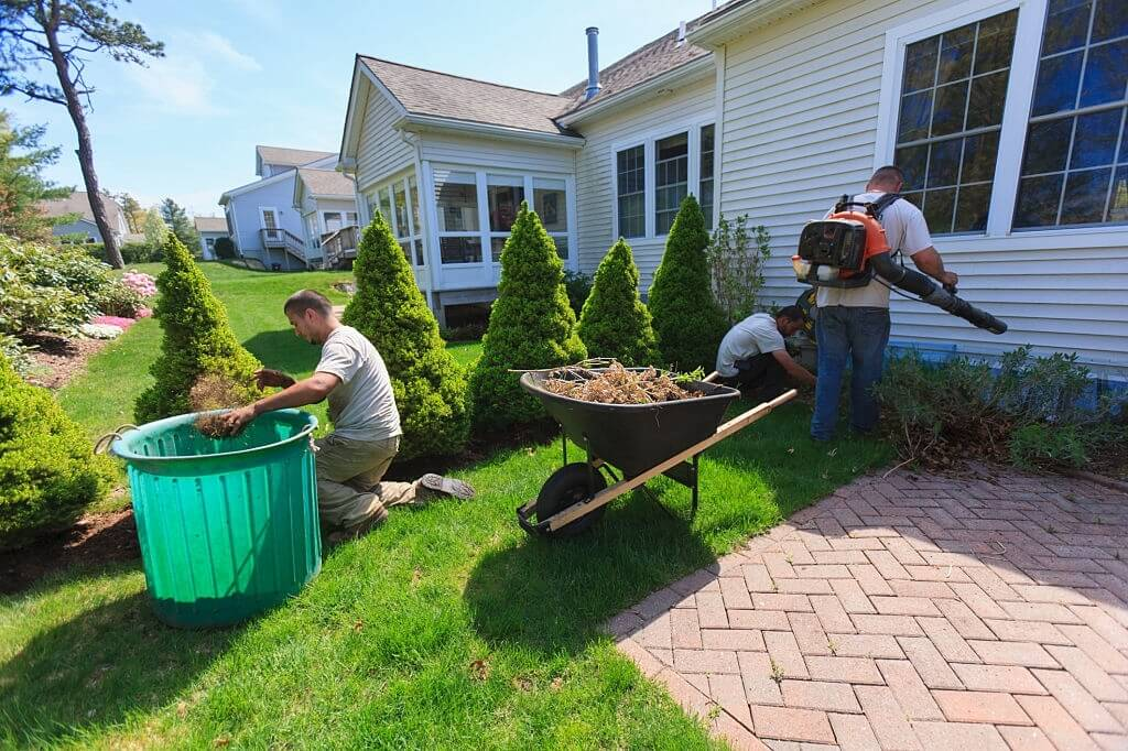 Lawn Weed Removal & Maintenance Guide