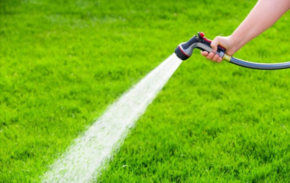 Over-Watering Your Lawn