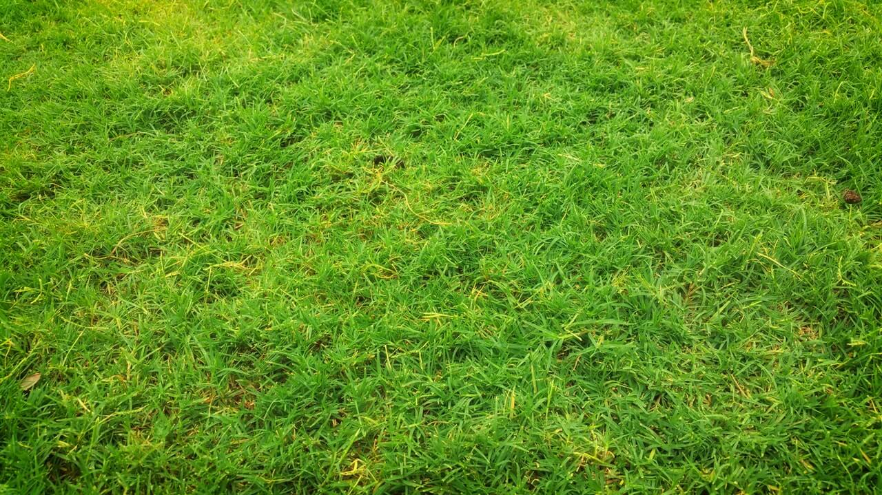 Weeds That Look Like Grass