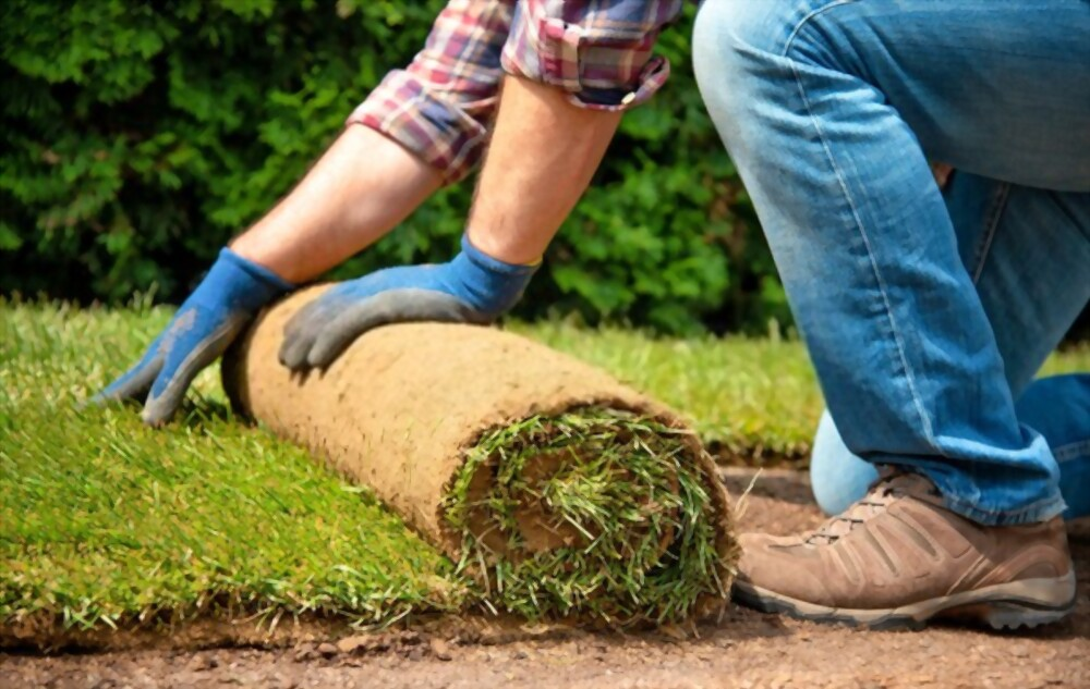 How to Lay Sod?