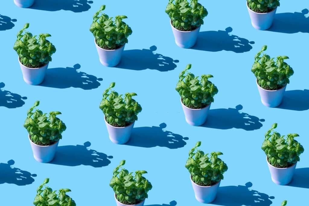 Plants In Sunlight