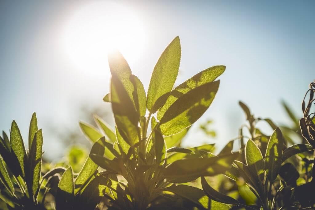 Plants in Open Environment