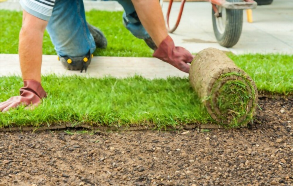 How to Lay Sod Guide